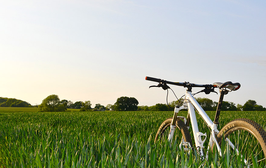 Bicycle in Grass